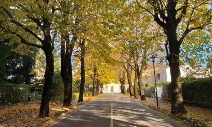 Verde pubblico a Castelfranco: 109 alberi potrebbero diventare monumentali