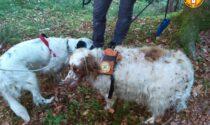 Recuperati Scott e Teo, i due cani di un trevigiano finiti in una forra