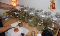 """Il dietologo trevigiano col """"vizietto"""" della marijuana: il video dell'insospettabile coltivazione indoor"""