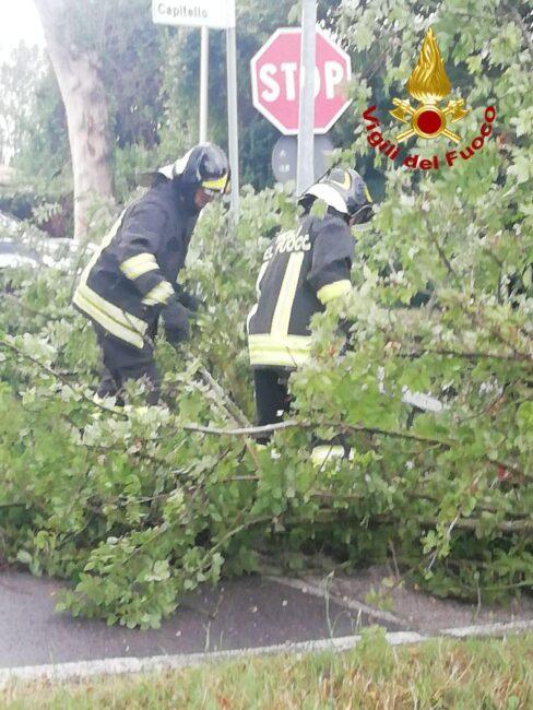 Maltempo con pioggia e forti raffiche di vento: Vigili del fuoco al lavoro