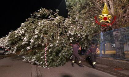 Forti temporali in Veneto, Zaia decreta lo stato di crisi