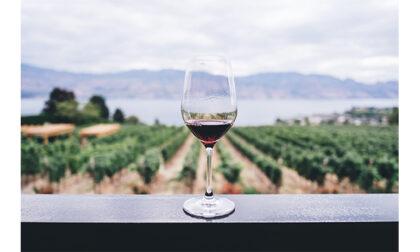 Destinazione vino: alla scoperta della Valpolicella e dei suoi eventi